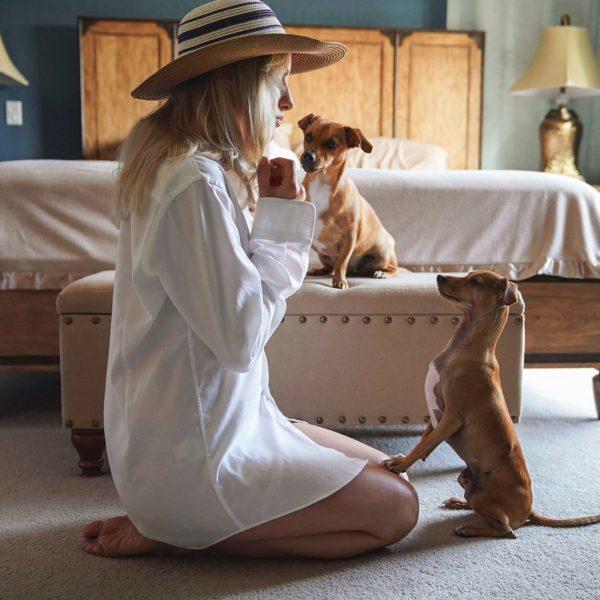 Koiran koulutus – Miten ja miksi kouluttaa koiraasi