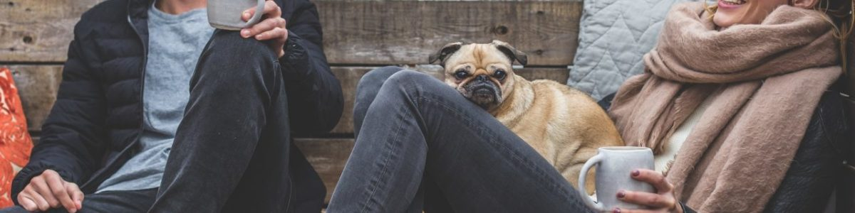 Loma & koiralle hoitaja – mihin jättää koira loman ajaksi